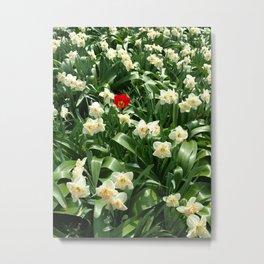 Be a Tulip Metal Print