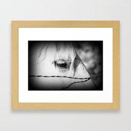 Horse's Eye: Black and White Photo Framed Art Print