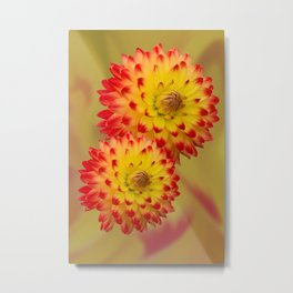 Dahlia Abstract Metal Print