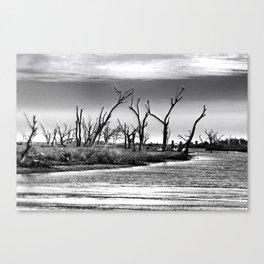 Dying Cypress Trees, Louisiana Canvas Print