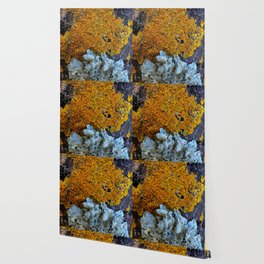 Tree Bark Pattern # 6 with Orange and Blue Lichen Wallpaper