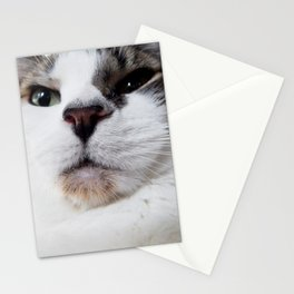 Pollux's Cat Face Stationery Cards