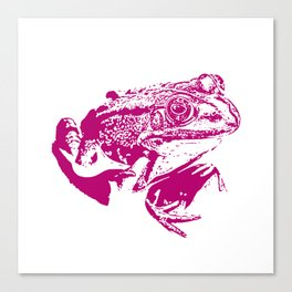 pink frog IV Canvas Print