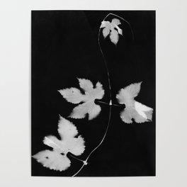 Black and White Hop Vine Poster