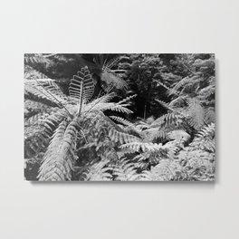 Australian tree ferns Metal Print