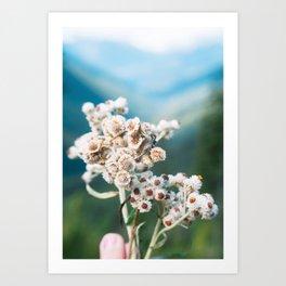 Alpine Flowers for You Art Print
