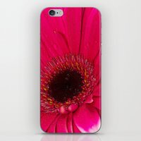 hot pink iPhone & iPod Skins featuring Hot Pink by Paul & Fe Photography