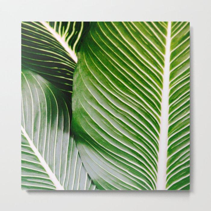 Big Leaves - Tropical Nature Photography Metal Print