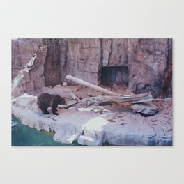the brown bear Canvas Print