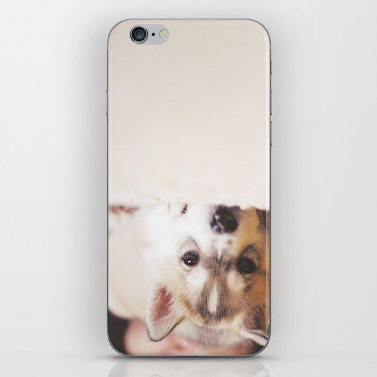 "siberian husky puppy - ""nova"" iPhone Skin"