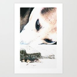 Dog Day Afternoon Art Print