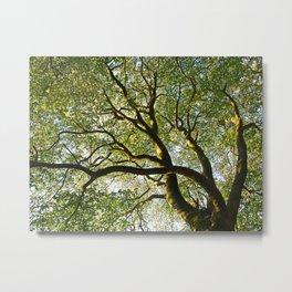 Beech Tree Canopy Metal Print