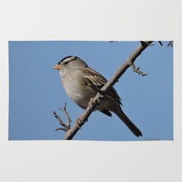 A White-Crowned Sparrow Eyes the Botanic Garden Rug