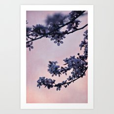 blossoms at dusk Art Print