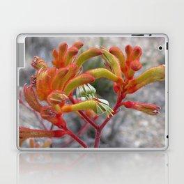 Orange Kangaroo Paw Flowers Laptop & iPad Skin