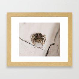 Stalking prey Framed Art Print