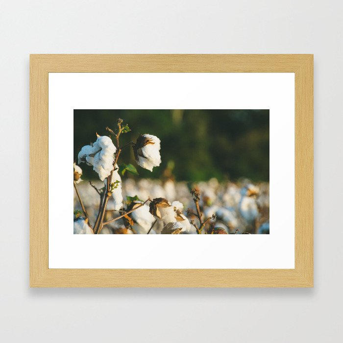 Cotton Field 10 Framed Art Print