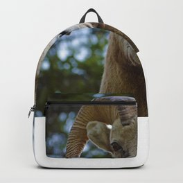 Natures best starring contest Backpack