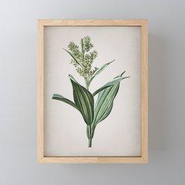 Vintage False Helleborine Botanical on Parchment Framed Mini Art Print