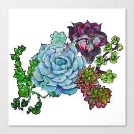 Sweet Succulents Canvas Print