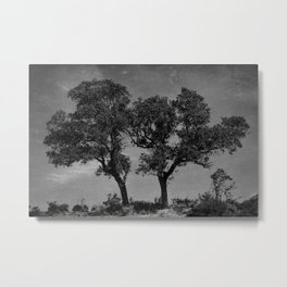 Campo Trees Metal Print