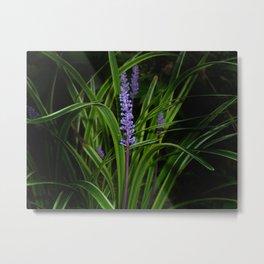 Wild flower... Metal Print
