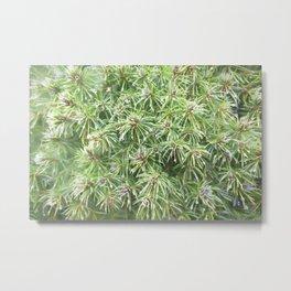 Spring Rain on Spruce Needles Metal Print