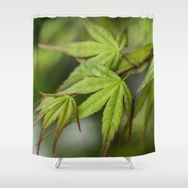 Japanese Maple in Green Shower Curtain