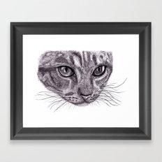 Cats eyes... Framed Art Print
