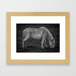 Italian Horse Framed Art Print
