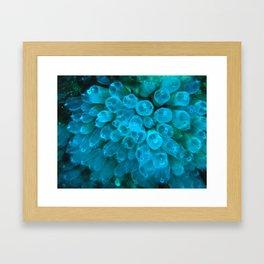 Bluebell Tunicate  Framed Art Print