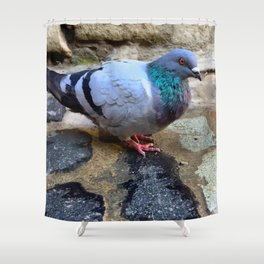 Pigeon in Girona, Spain Shower Curtain