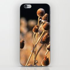 Brown Eyes iPhone & iPod Skin