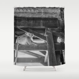 Angkor Wat Long-Tail Macaque (Monkey), Cambodia Shower Curtain
