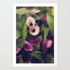 Purple Callas Art Print