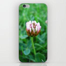 Santa Barbara Clover Blossom 2520 iPhone Skin