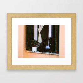 Island Cats Framed Art Print