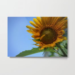 Sunfower Metal Print
