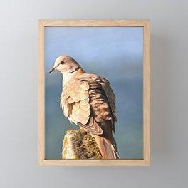 Artistic Ring Necked Dove Framed Mini Art Print