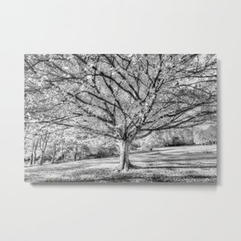The Ghost Tree Metal Print