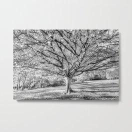 The Ghost Tree Metal Print