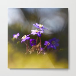 Sweetest Spring Blossom Hepatica Forest #decor #society6 Metal Print