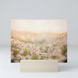Spring Mornings White Daisies Mini Art Print
