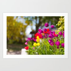 Tulips Art Print