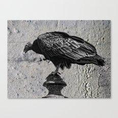 Cemetery Vulture Canvas Print