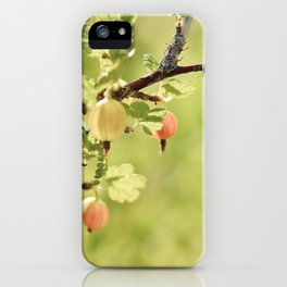 gooseberry fruits iPhone Case