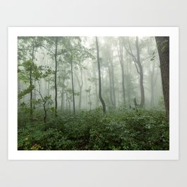 Smoky Mountain Summer Forest - National Park Nature Photography Art Print