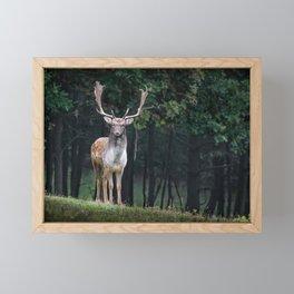 Fallow Deer Stag Dama Framed Mini Art Print