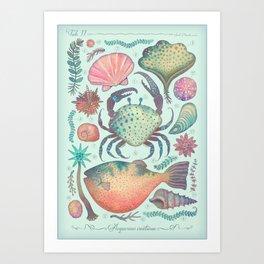 Marine Creatures II Art Print