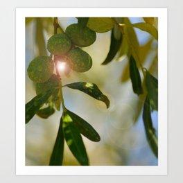 Greek Olive Tree Art Print